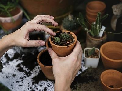 Ateliers jardinage |